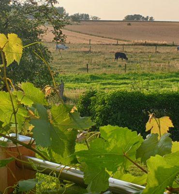Co-Caring Village Wambeek Ternat zicht op de velden